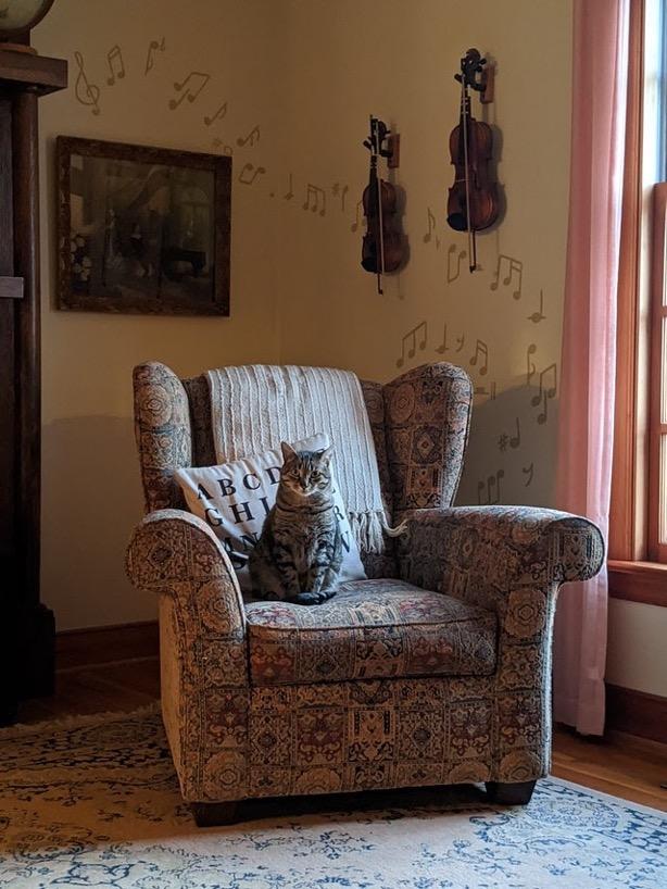 A cat sitting in a big armchair